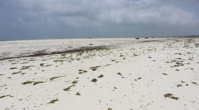 Ebbe in Paje Sansibar